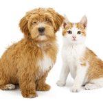 balanced pet sitter
